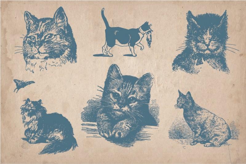 Cats_screen_5