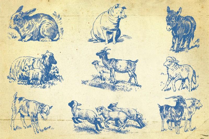 Farm_animals_2