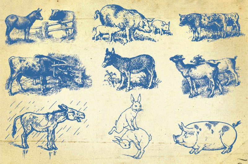 Farm_animals_3