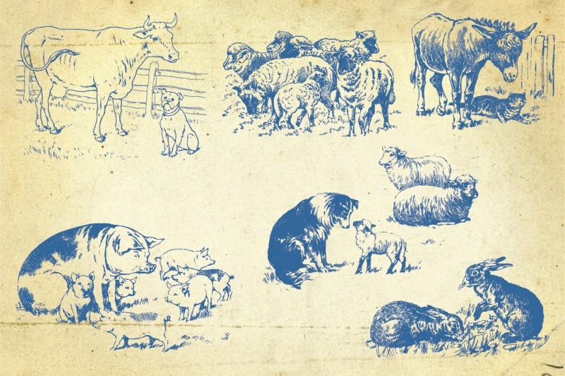 Farm_animals_5