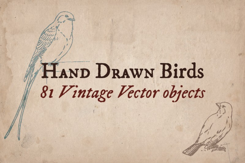 Hand_Drawn_Birds_Screen_1