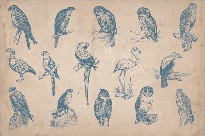 Hand_Drawn_Birds_Screen_3