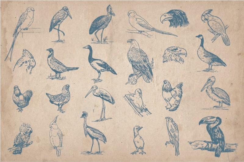 Hand_Drawn_Birds_Screen_4