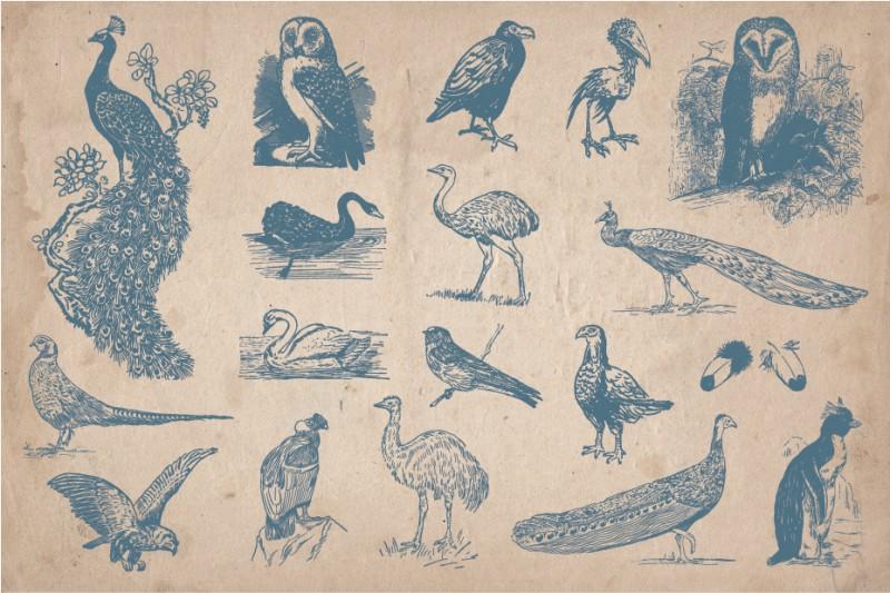 Hand_Drawn_Birds_Screen_5