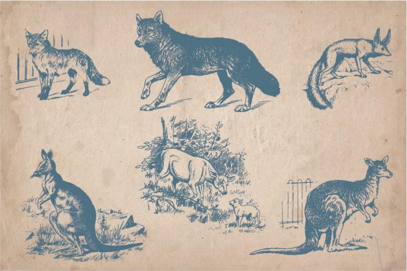 Vintage_wild_animals_4
