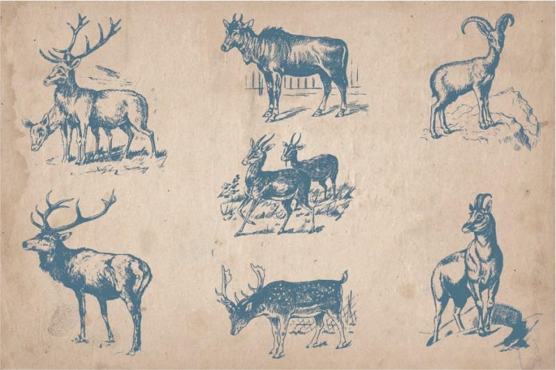 Vintage_wild_animals_5