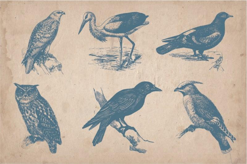 birds_screen_2