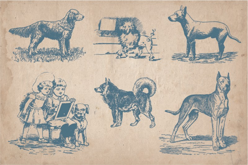 dogs_screen_4