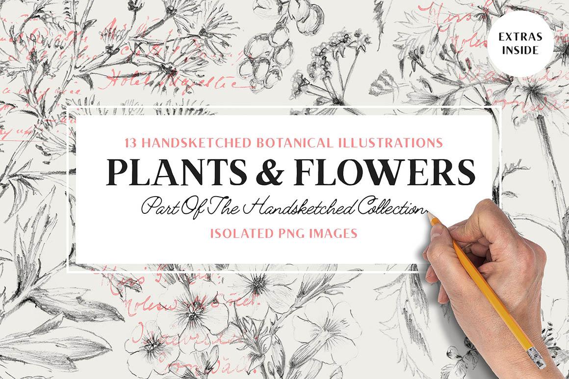 13-botanical-illustrations1