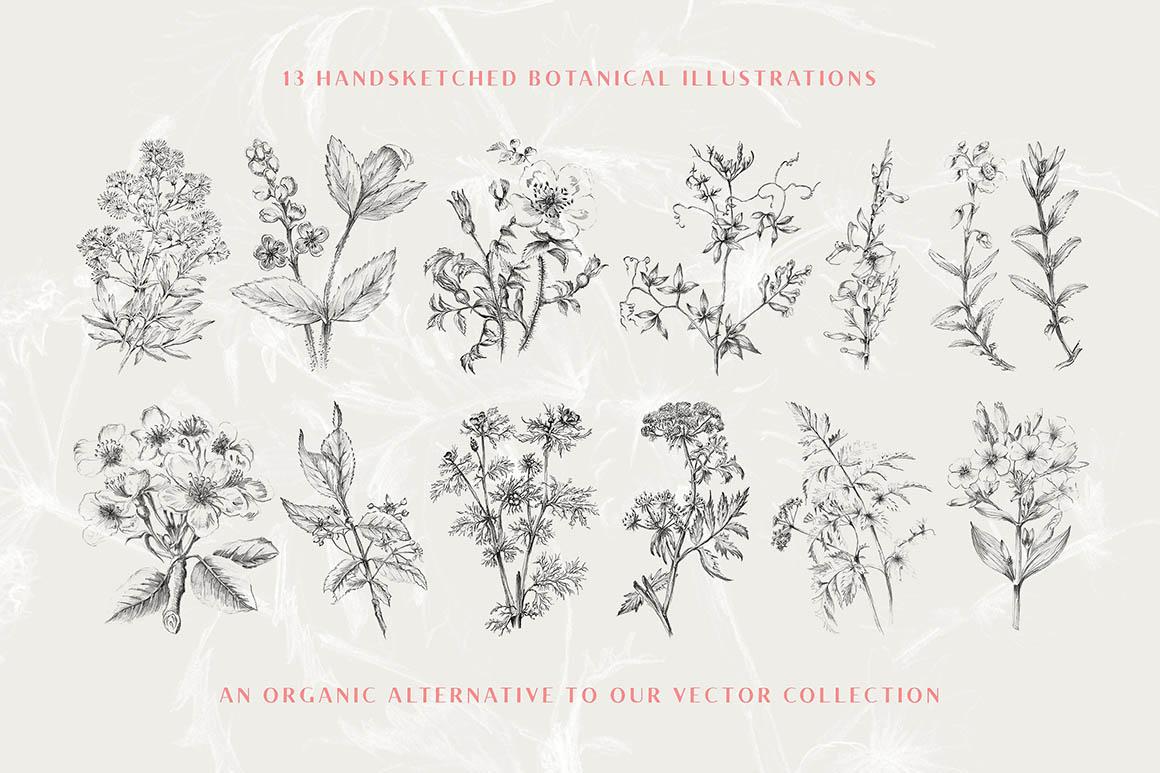 13-botanical-illustrations2