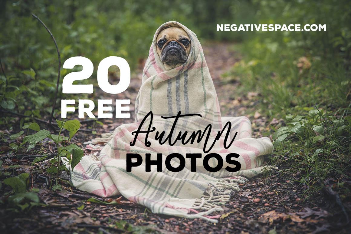 20AutumnPhotosNegativespace1