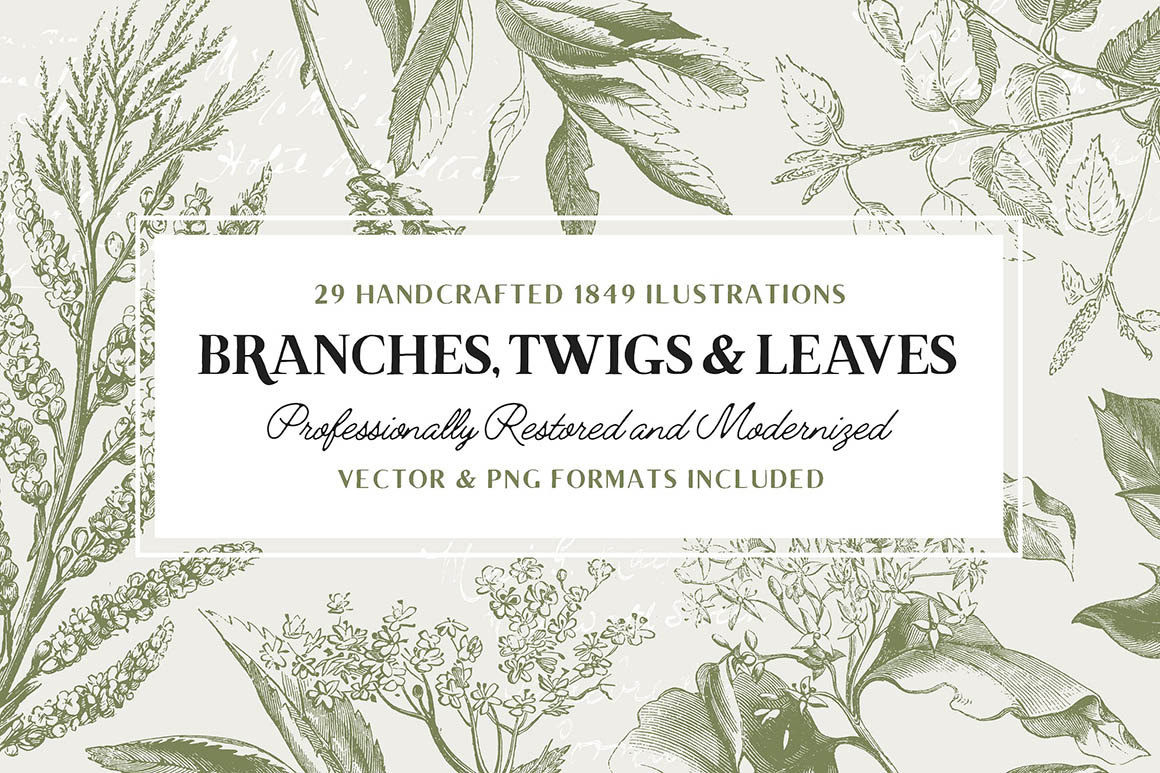 29-branches1
