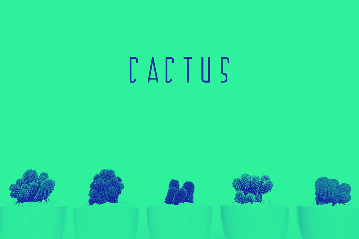 Cactus1