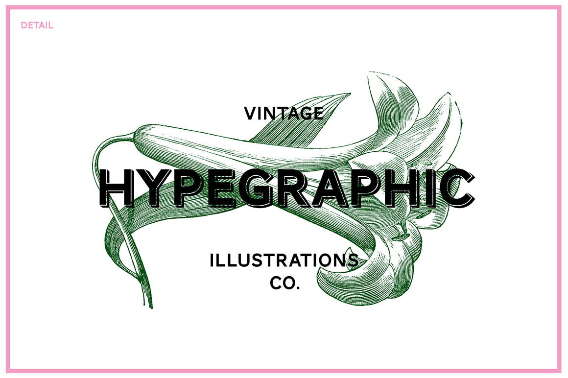 Floral-Vintage-Vector-Illustrations-04