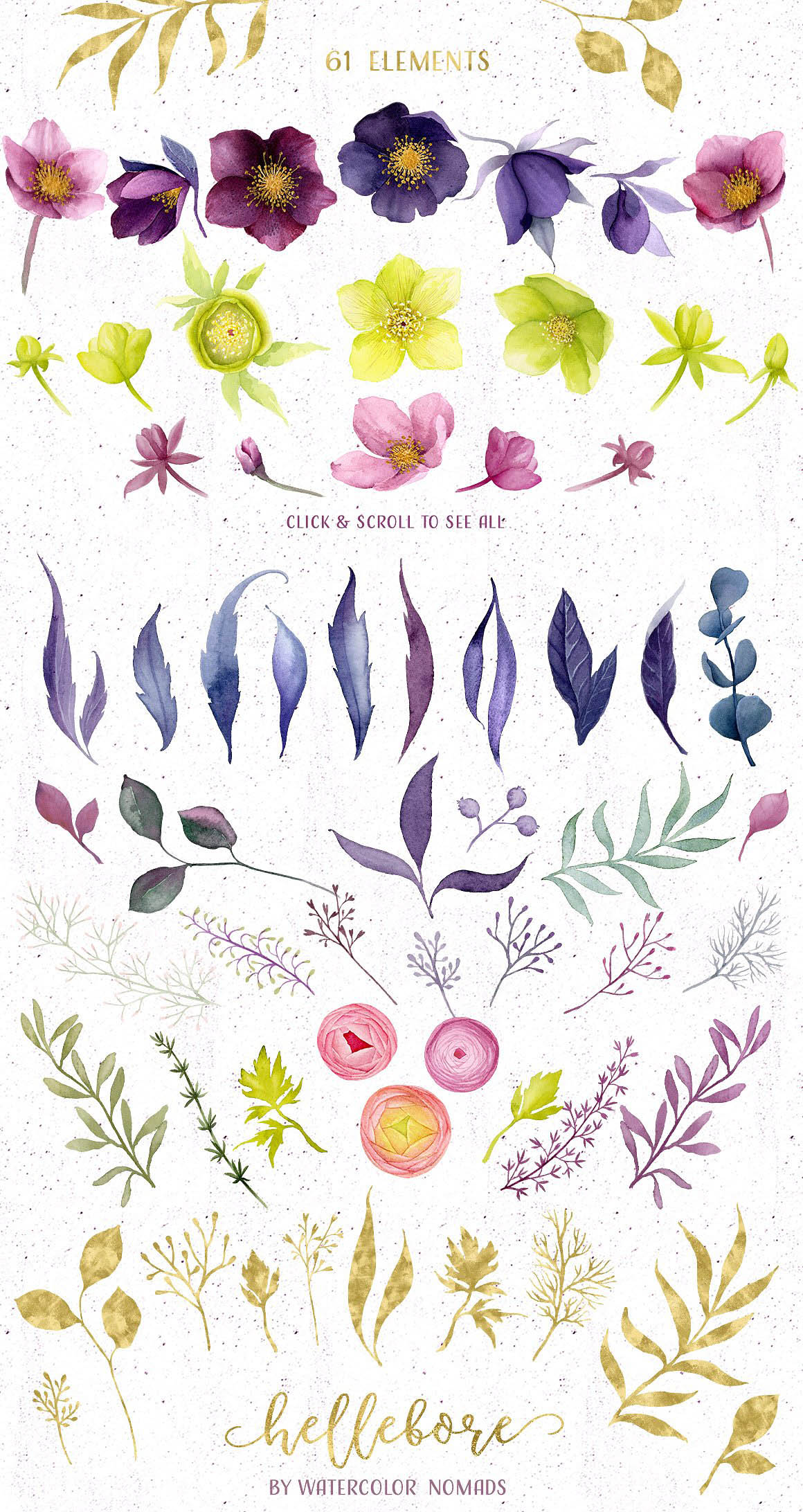 Hellebore Flowers Watercolor Set 5
