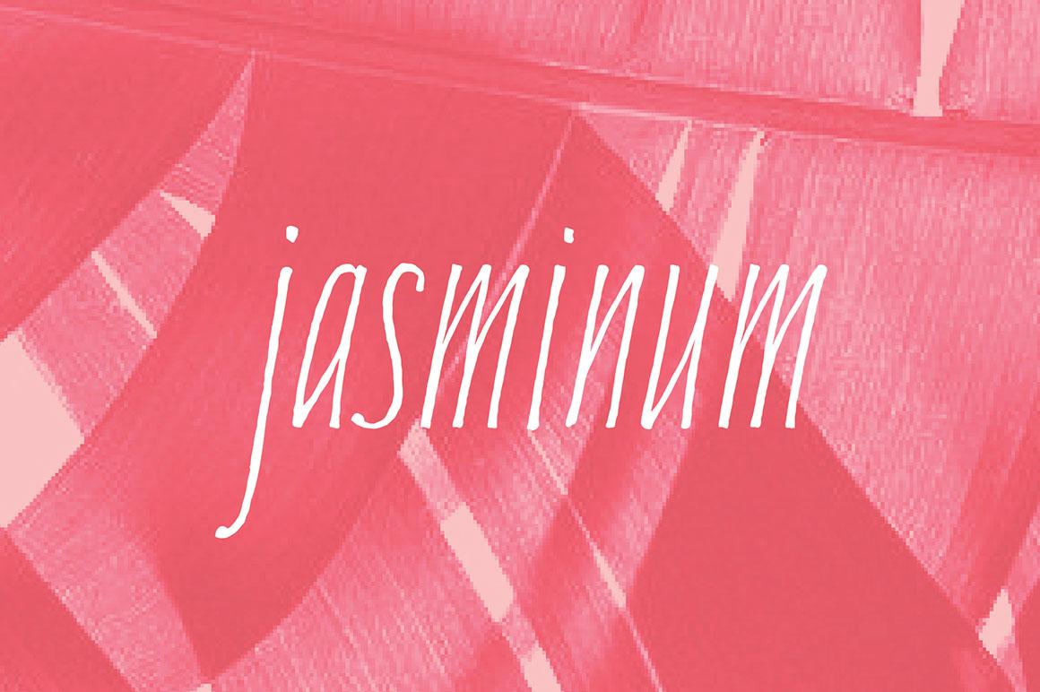 Jasminum1