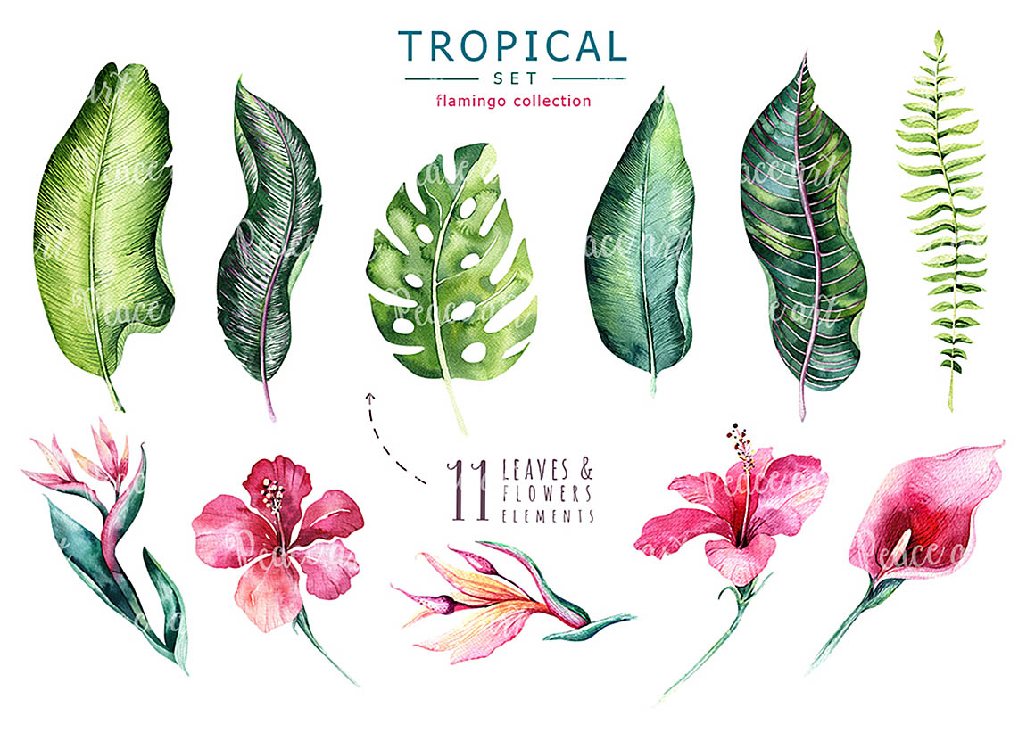 Big collection of different hand drawn floral elements on chalkboard background.