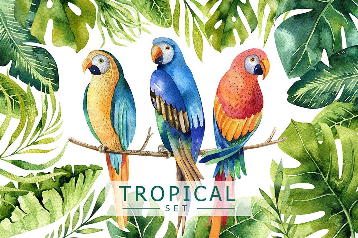 tropical_parrots1