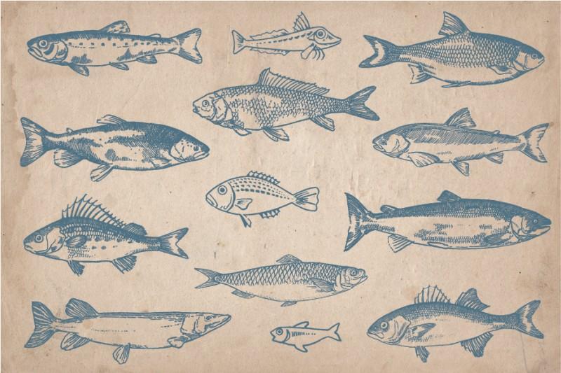 fish_Screen_3