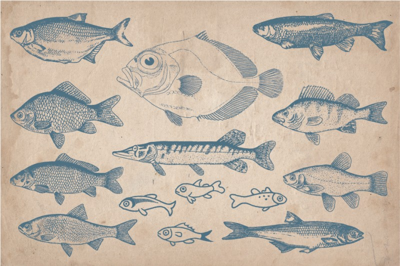 fish_Screen_5