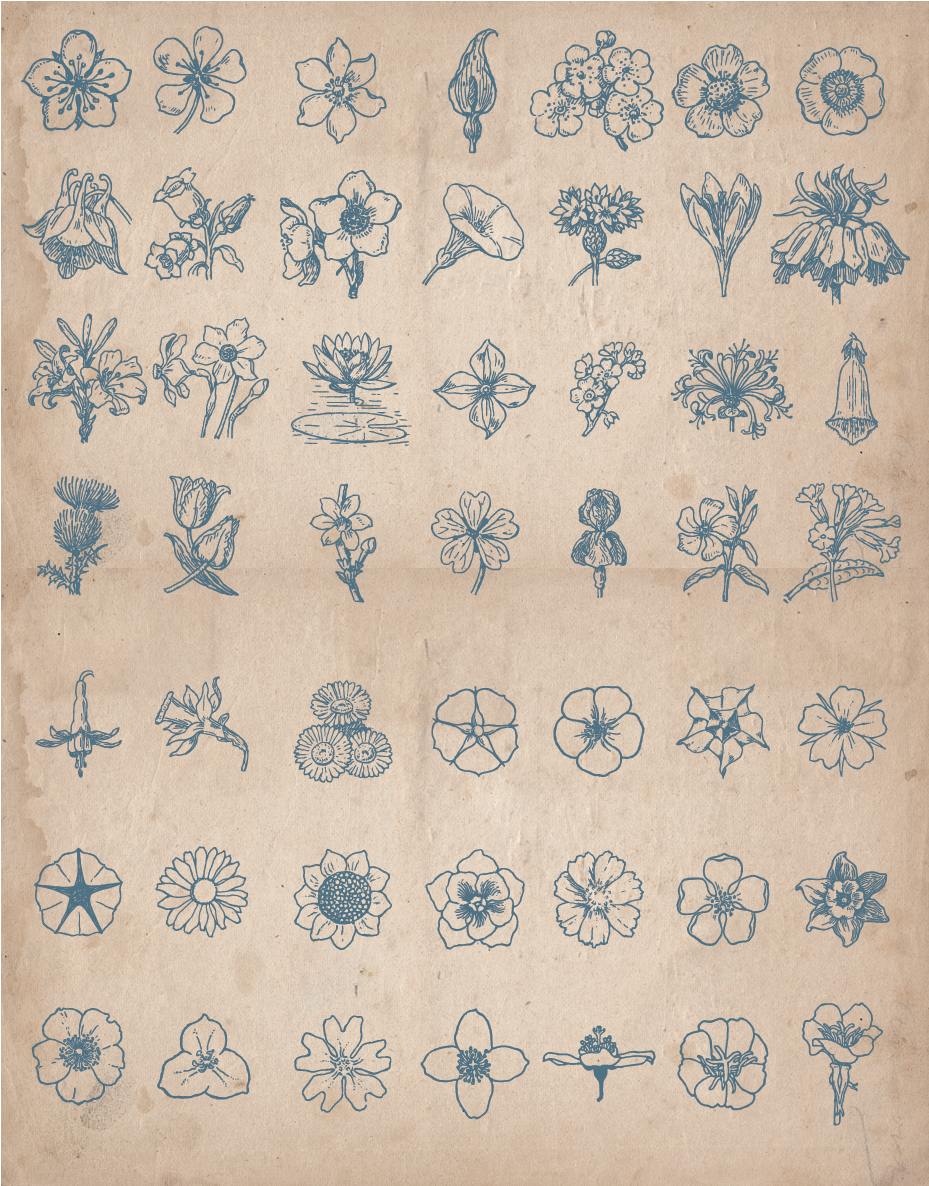 floral_screen_2
