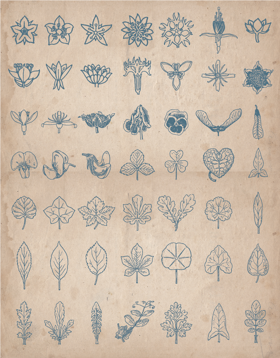 floral_screen_3