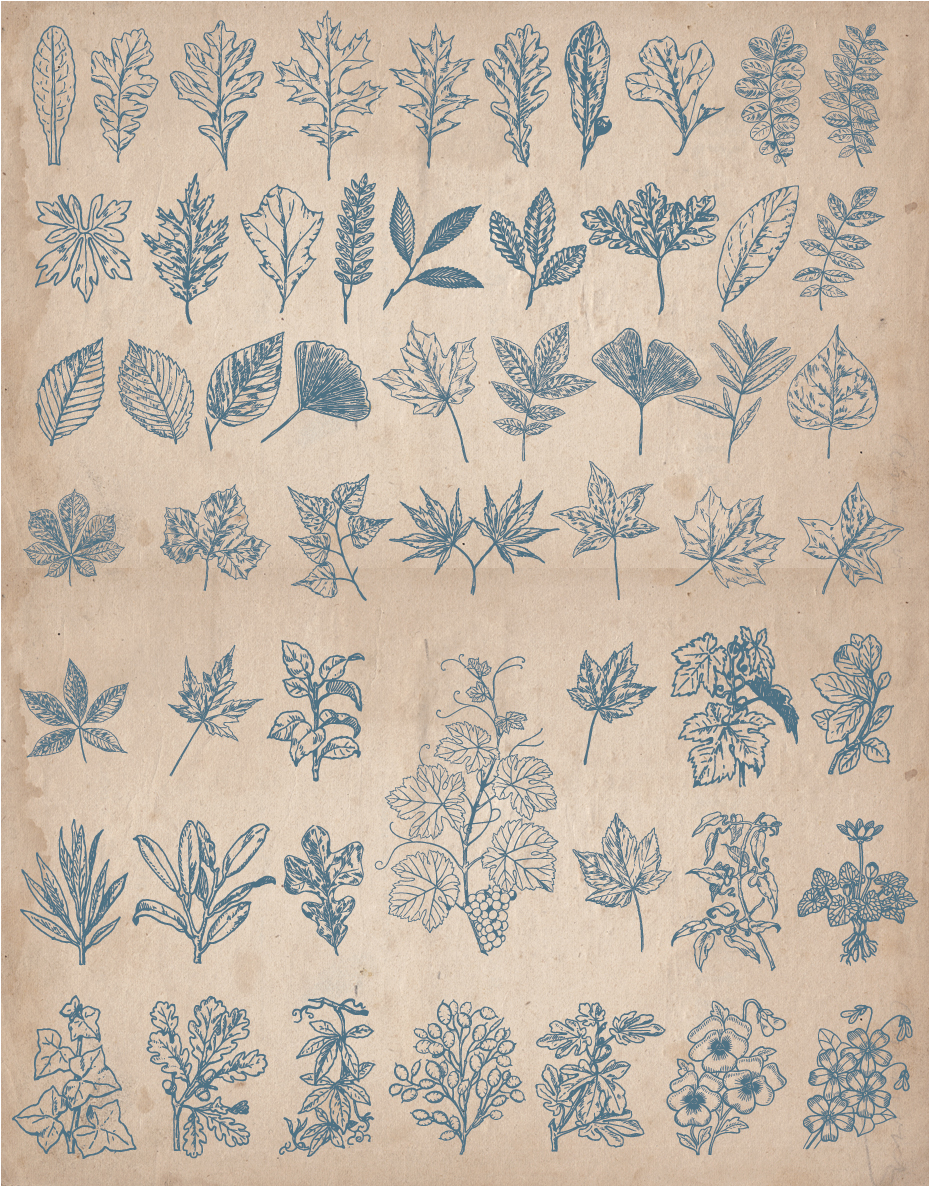 floral_screen_4